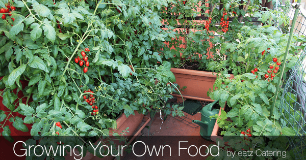 Growing Your Own Food in Singapore